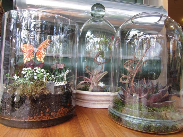 It S A Small World Making Your Own Terrarium The Martha S