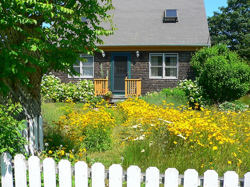 Six Principles To Boost Native Species In Your Yard The Martha S Vineyard Times