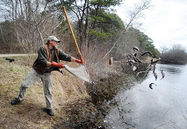 Trout truck is scheduled to arrive on thursday the for Mass fish stocking
