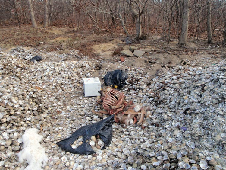 Deer carcasses dumped in Edgartown