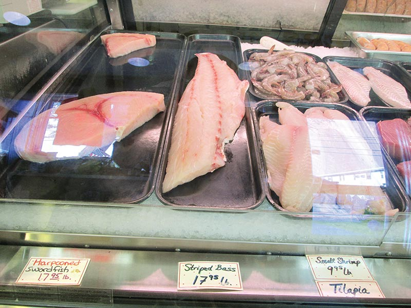 Dmf vineyard public hearing will focus on bass conch for Mass commercial fishing license