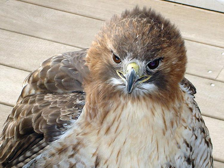 Caretaker helps accidental houseguest take wing
