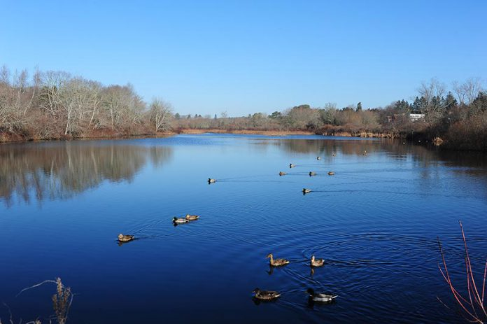 The Mill Pond in West Tisbury
