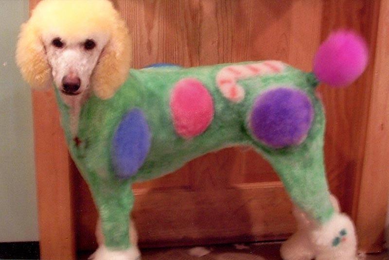 Dog Grooming Martha S Vineyard