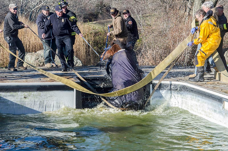 Horse rescued from pool in west tisbury the martha 39 s for Negative show pool horse racing