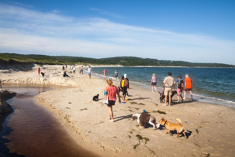 Dogs Take To Lambert S Cove Beach The