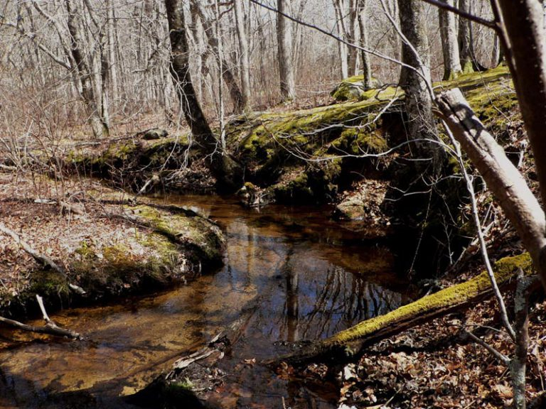 Mill Brook watershed committee wants answers about phosphorus