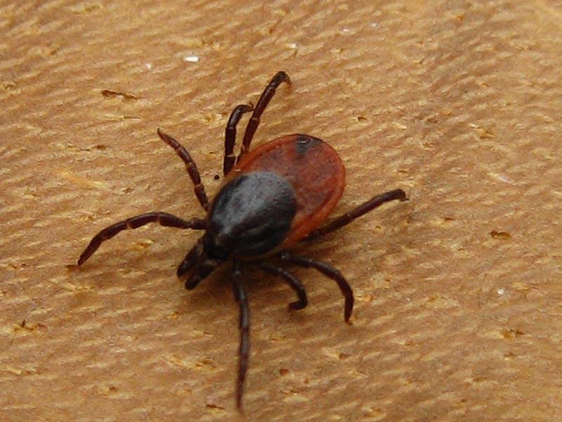 CDC study slams Lyme disease treatment with long-term