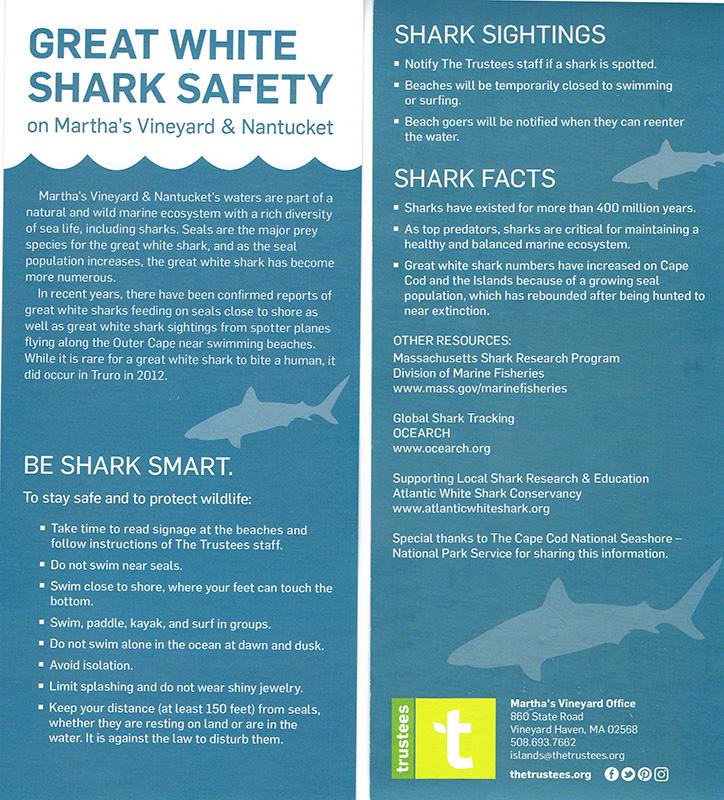 Wellfleet Shark Fatality On Vineyard Officials' Minds