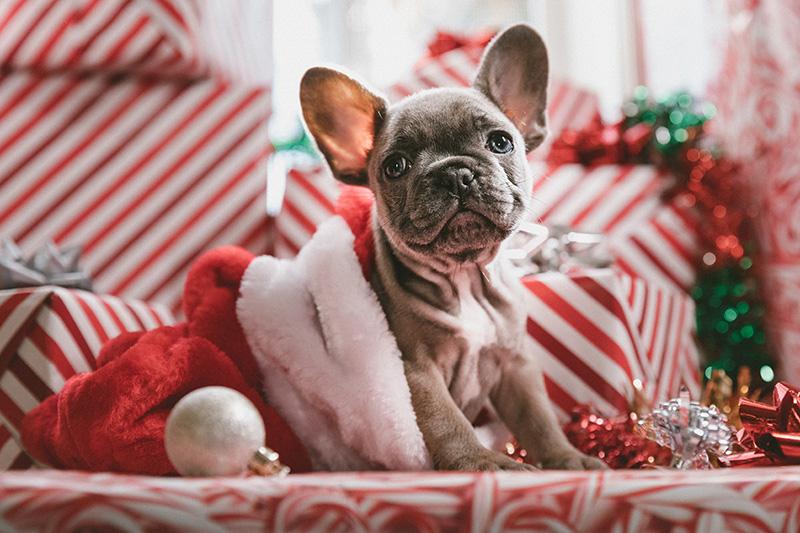 Visiting Vet A Puppy For Christmas Marthas Vineyard Timesthe