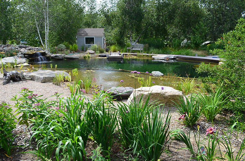 Design Q+A: Natural swimming pools - The Martha\'s Vineyard Times
