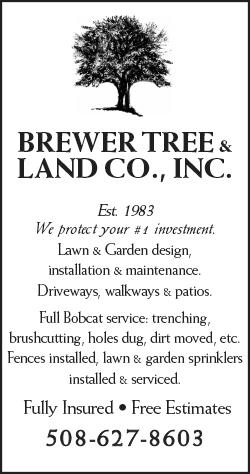 bd_brewer_tree_land
