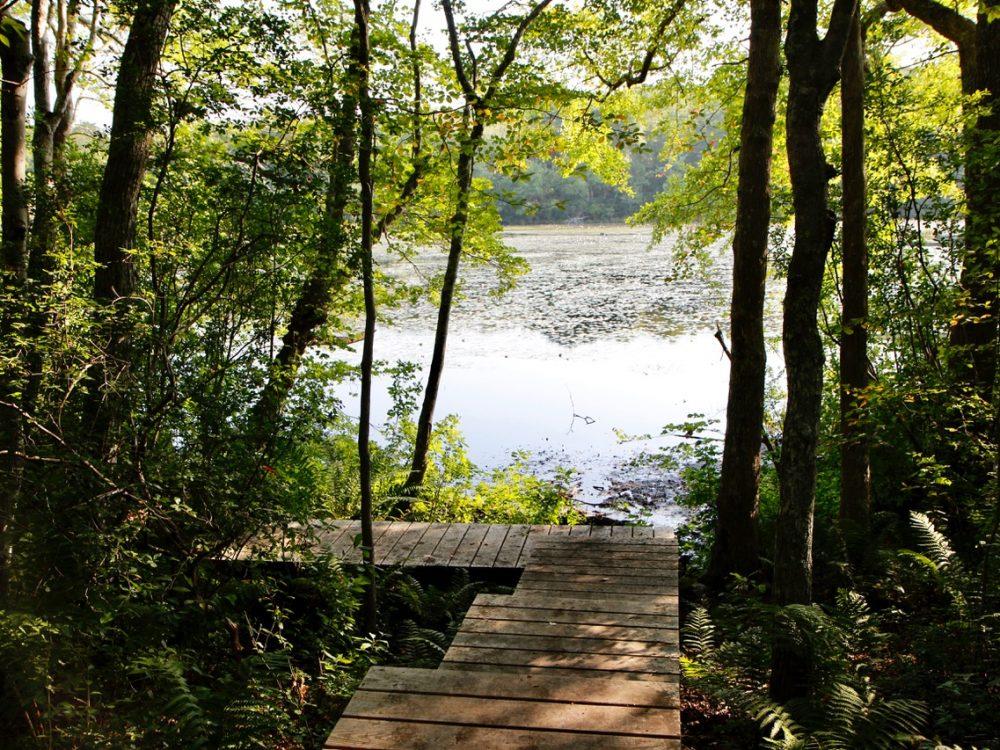 Blackwater Pond Reservation  -Kate Warner