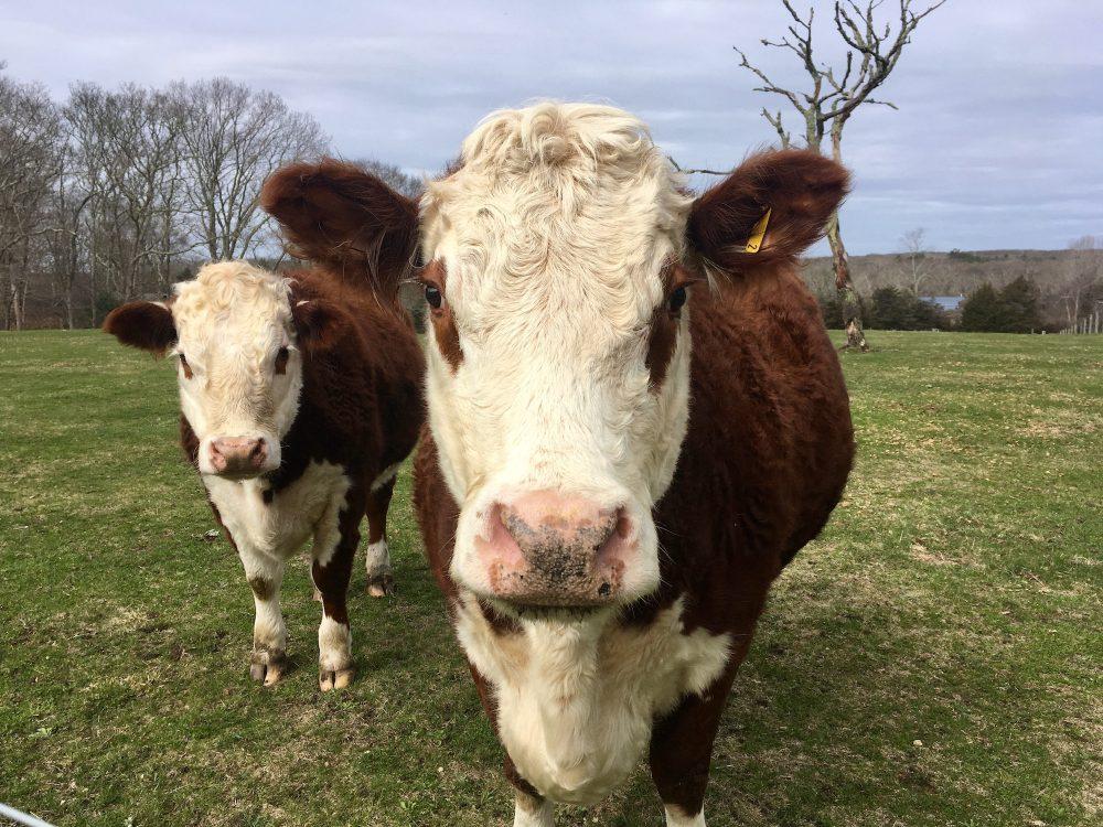 Featherstone Farm -Nancy Tutko