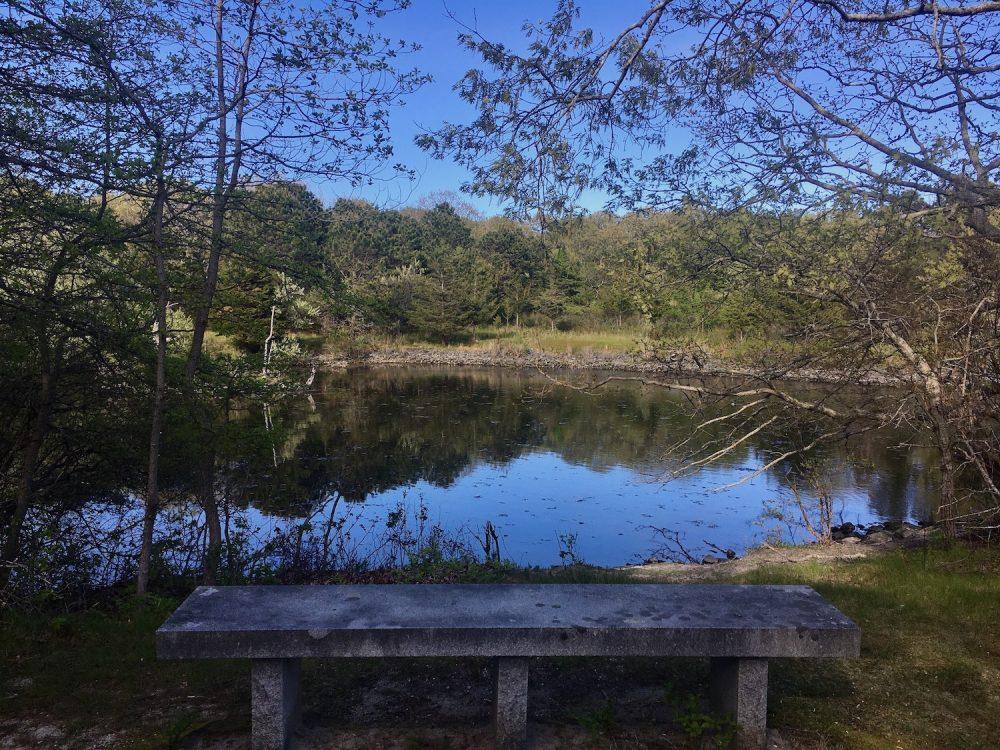Felix Neck Wildlife Sanctuary  -Nancy Tutko
