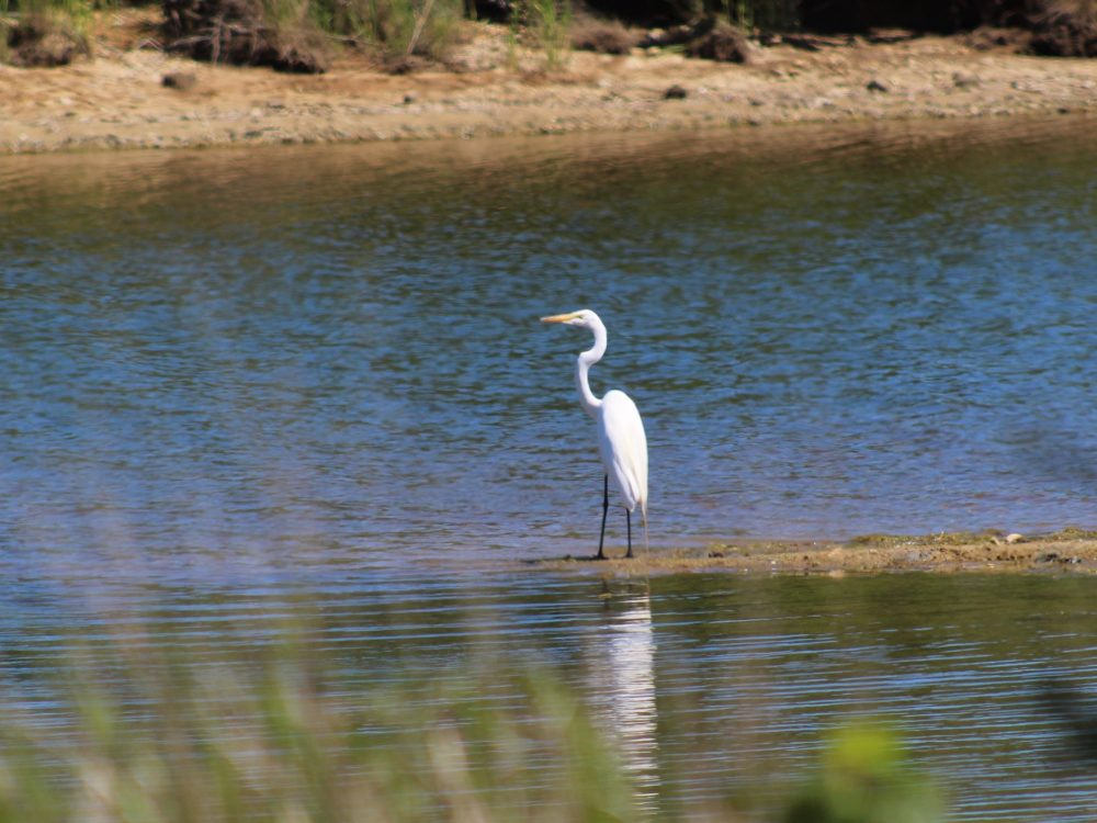 Short Cove Preserve  -Isabella Youmans