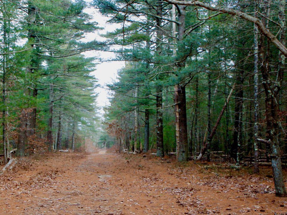 Manuel F. Correllus State Forest -Kate Warner