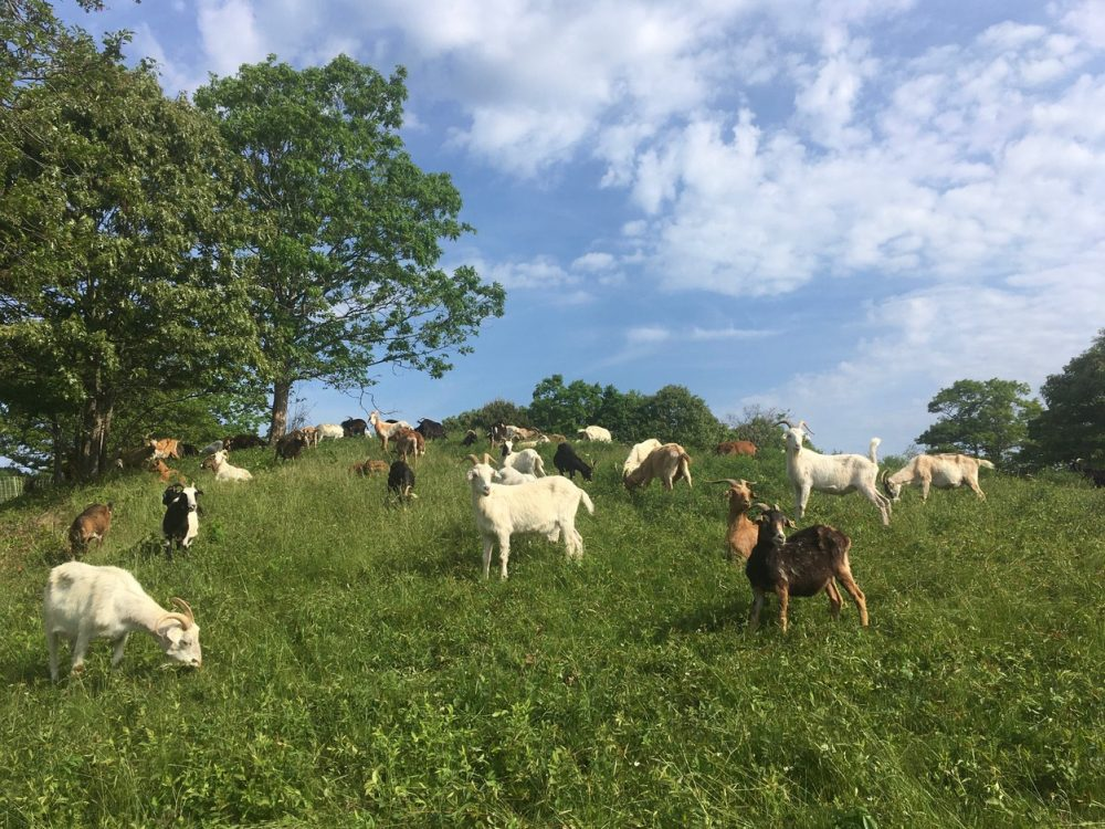 Tisbury Meadow Preserve -Nancy Tutko